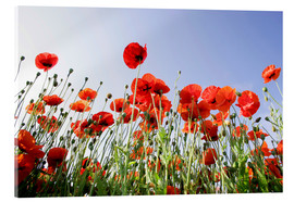 Acrylic print  Poppies low Angle View - Lichtspielart