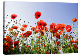 Canvas print  Poppies low Angle View - Lichtspielart