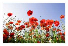 Premium poster Poppies low Angle View