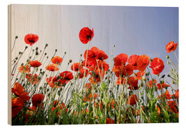 Wood print  Poppies low Angle View - Lichtspielart