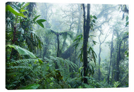 Canvas print  Rainforest in Costa Rica - Matteo Colombo