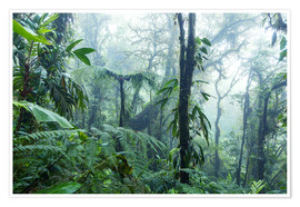Premium poster Rainforest in Costa Rica
