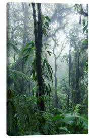 Canvas print  Costa Rica - Rainforest - Matteo Colombo