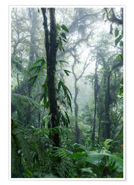 Premium poster  Costa Rica - Rainforest - Matteo Colombo