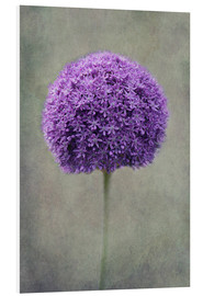 Foam board print  Allium - Claudia Moeckel