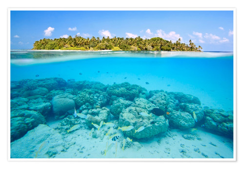 Poster Reef and tropical island, Maldives