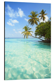 Aluminium print  Turquoise sea and palm trees, Maldives - Matteo Colombo