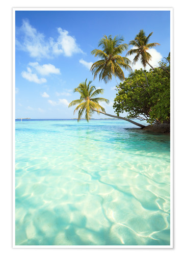 Premium poster Turquoise sea and palm trees, Maldives