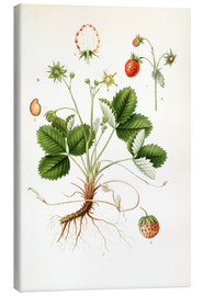 Canvas print  Strawberry - Carl Axel Magnus Lindman