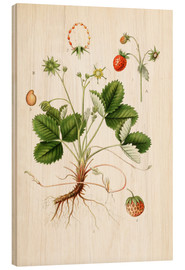 Wood print  Strawberry - Carl Axel Magnus Lindman