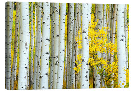 Canvas  birch forest - Rob Tilley