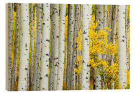 Wood print  Birch groves in the autumn - Rob Tilley