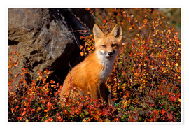Premium poster Red fox in the autumn leaves