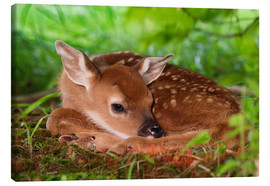Canvas  Bambi in the grass - Adam Jones
