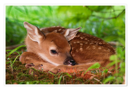 Premium poster Bambi in the grass