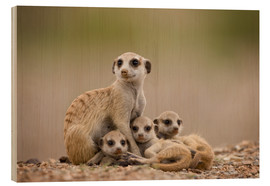 Wood print  Meerkat family in Namibia - Paul Souders
