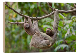 Wood print  Brown-throated sloth with baby - Jim Goldstein
