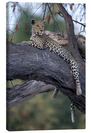 Canvas print  Leopard is resting on tree - Paul Souders
