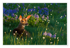 Premium poster Fawn on alpine flower meadow