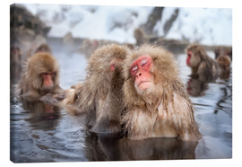 Canvas print  Japanese Snow Monkeys in Nagano - Jan Christopher Becke