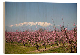 Wood print  Fruit blossom, Mont Canigou - Mark Mawson