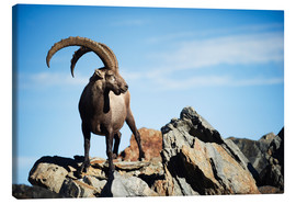 Canvas print  Capricorn - Christian Kober