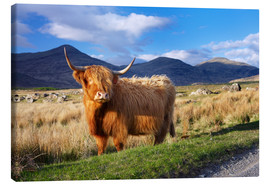 Canvas  Highland Cattle - Patrick Dieudonne