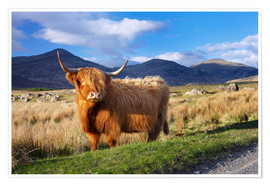Premium poster Highland Cattle