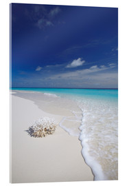 Acrylic glass  Coral on white sand beach - Sakis Papadopoulos