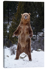 Canvas  Grizzly Bear standing in the snow - James Hager