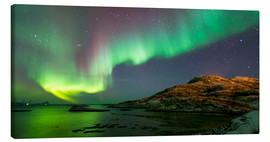 Canvas print  Northern Lights near Tromso, Norway - Louise Murray