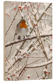 Wood print  Robin, with berries in snow - Ann & Steve Toon