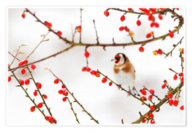 Premium poster Goldfinch in winter
