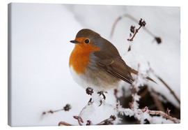 Canvas print  Robin in winter - Ann & Steve Toon