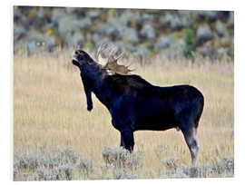 Foam board print  Moose calling, Wasatch Mountain State Park - James Hager