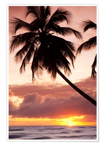 Poster Tropical sunset in Barbados, Caribbean