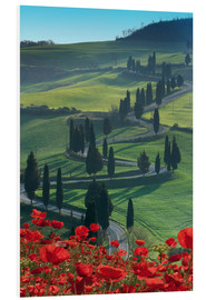 Foam board print  Winding road and poppies, Montichiello, Tuscany, Italy, Europe - Angelo Cavalli