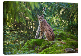 Canvas print  Lynx in the Bavarian National Park - Roberto Moiola