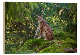 Wood  Lynx in the Bavarian National Park - Roberto Moiola
