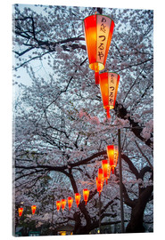 Acrylic print  Red lanterns illuminating the cherry blossom in the Ueno Park, Tokyo, Japan, Asia - Michael Runkel