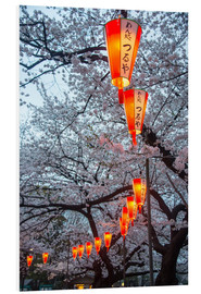 Foam board print  Red lanterns illuminating the cherry blossom in the Ueno Park, Tokyo, Japan, Asia - Michael Runkel