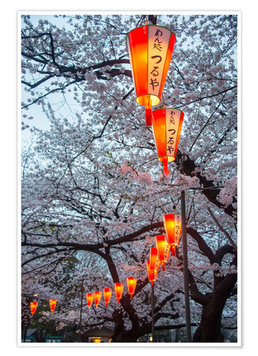 Premium poster Red lanterns illuminating the cherry blossom in the Ueno Park, Tokyo, Japan, Asia