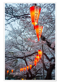 Poster  Red lanterns illuminating the cherry blossom in the Ueno Park, Tokyo, Japan, Asia - Michael Runkel