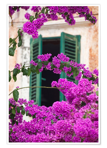Premium poster Shuttered window and blossom