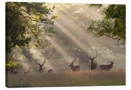 Canvas  Deer in morning mist - Stuart Black