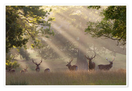 Poster  Deer in morning mist - Stuart Black