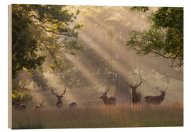 Wood print  Deer in morning mist - Stuart Black