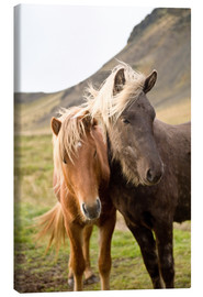 Canvas  Horses, South Iceland, Northern Europe