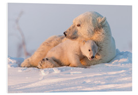 Foam board print  Polar bear (Ursus maritimus) and cub, Wapusk National Park, Churchill, Hudson Bay, Manitoba, Canada, - David Jenkins