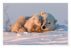 Premium poster  Polar bear and cub, Wapusk National Park - David Jenkins